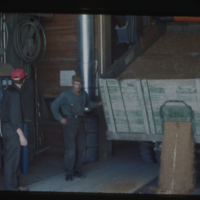 [Two men watching grain pour from a truck into a grain elevator]