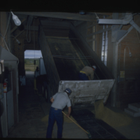 [Two men sweeping and shoveling grain from truck to elevator]