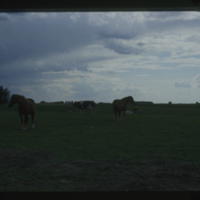 [Three horses and three cows in a field]