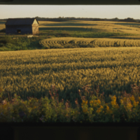 [Rolling cultivated fields and abandoned building]